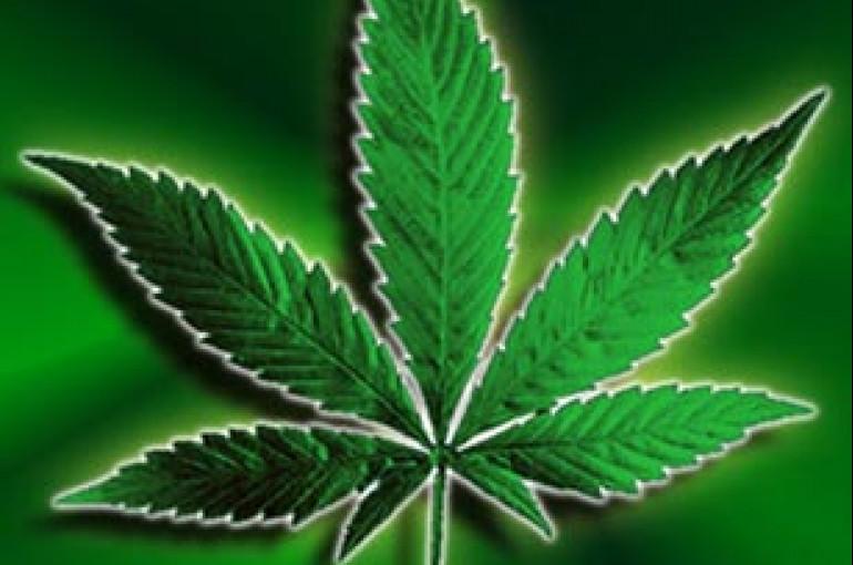 Джоли марихуана акт на уничтожении конопли