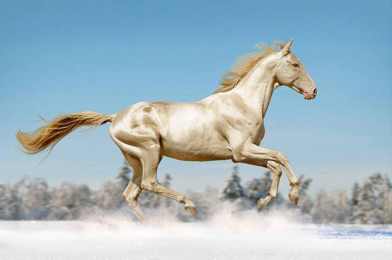Image result for ձի