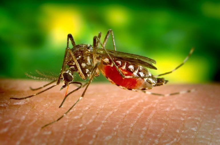 Image result for Գիտնականները պարզել են, թե ում են ավելի հաճախ կծում մոծակները