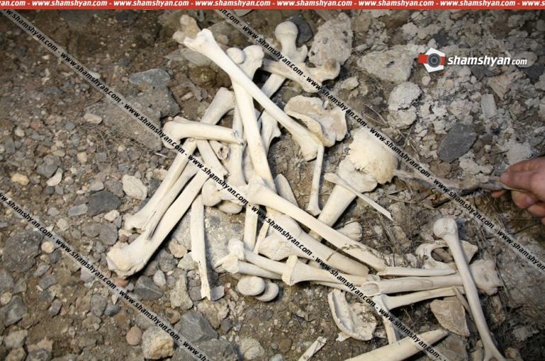 Առեղծվածային դեպք.Մասիսի կենտրոնական գերեզմանատան կից տարածքում հայտնաբերվել են մարդկային ոսկորներ