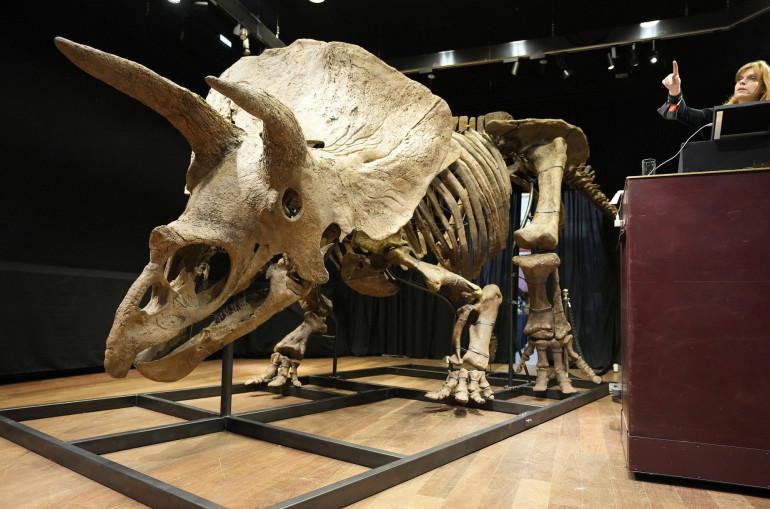Փարիզում 7,7 մլն դոլար արժողությամբ 66 մլն տարվա պատմություն ունեցող  դինոզավրի բացառիկ կմախք է վաճառվել