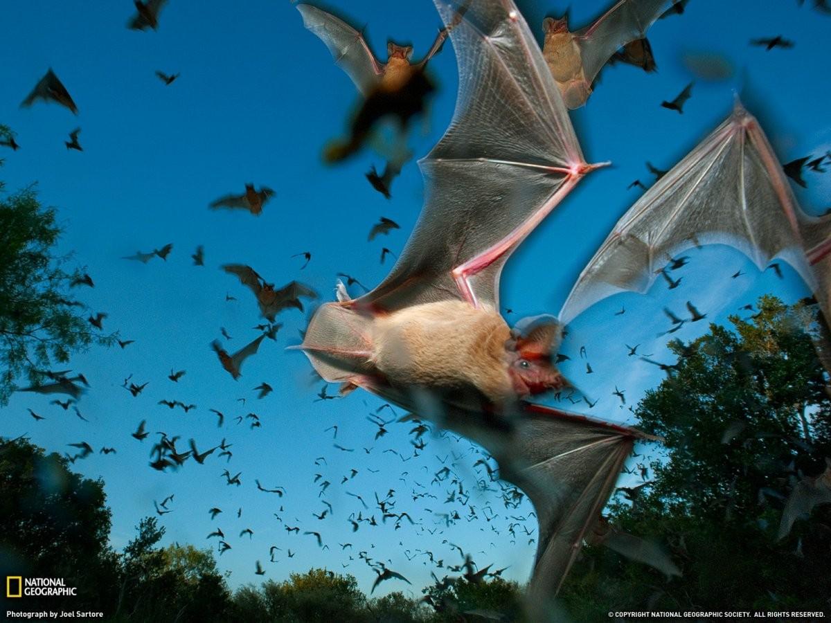 Как сделать летающую летучую мышь