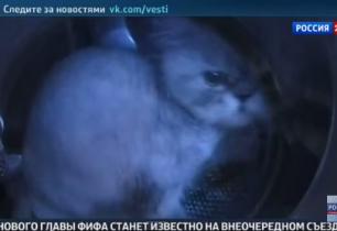 Постиравшие кота в стиральной машине
