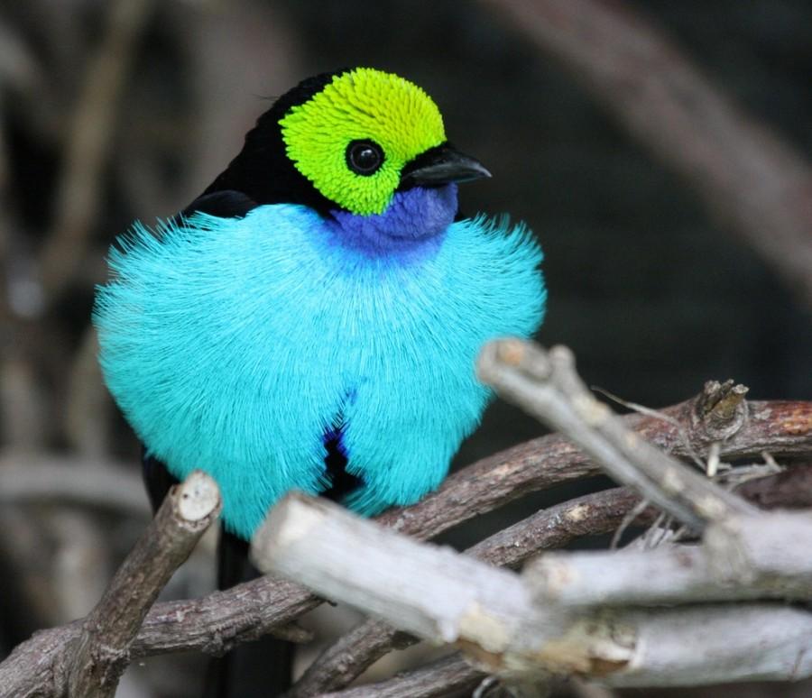 Աշխարհի 10 ամենագեղեցիկ թռչունները ...